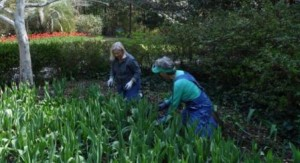Volunteer Opportunity- Airlie Gardens @ Airlie Gardens | Wilmington | North Carolina | United States